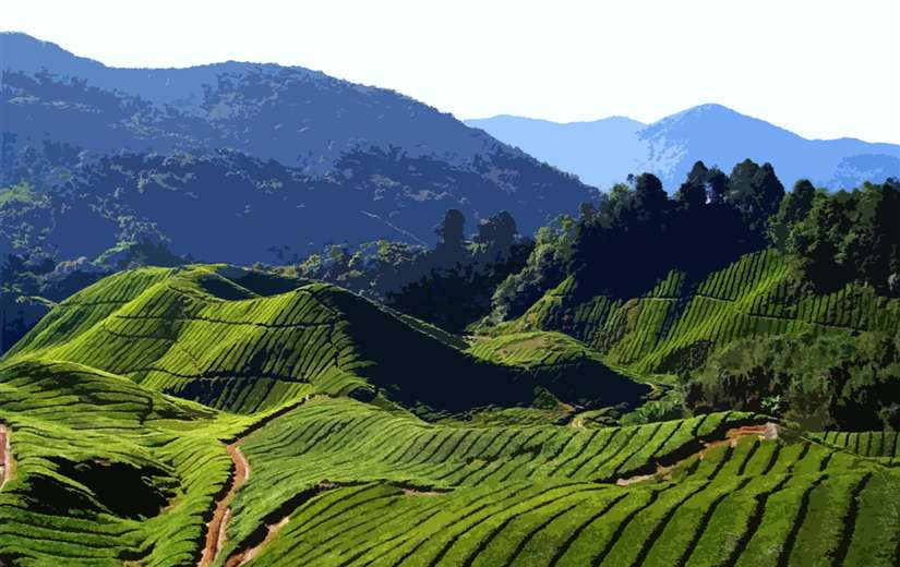 Kerala tour package 7 nights 8 days
