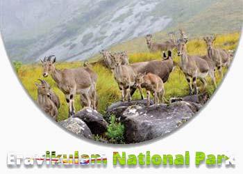 Eravikulam National Park (Rajamalai)
