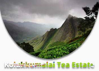 Kolukkumalai Tea Estate Munnar