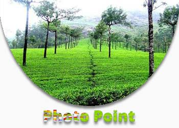 Photo Point Munnar