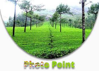 Photo Point Munnar