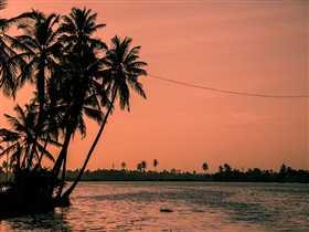 Kochi Image 6