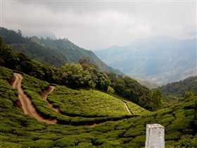 Munnar Photo 4