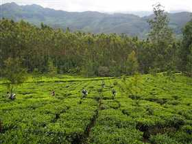 Munnar Photo 5