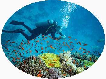 Scuba Diving in Kerala India
