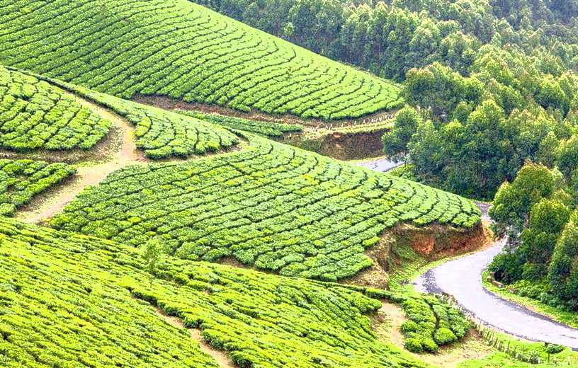 Kerala honeymoon packages from Mysore